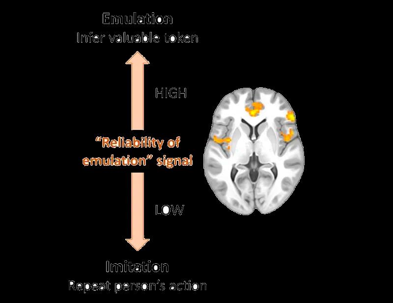 Como o cérebro escolhe como aprender